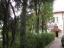 3 - Luminisul de la Biblioteca Bucovinei, condamnat la genocid dendrologic