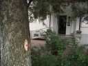 Luminisul de la Biblioteca Bucovinei, condamnat la genocid dendrologic. Vineri 23 sept. 2011. Copaci marcaţi pentru a fi asasinaţi...
