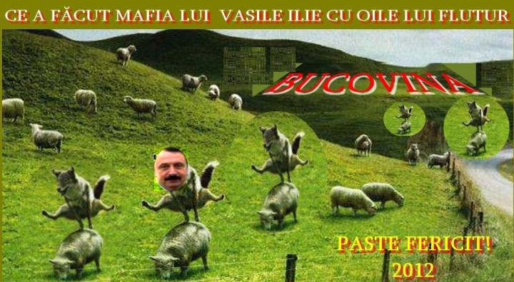 Paste Fericit in Bucovina 2012. Vezi ce a facut Mafia lui Vasile Ilie cu oile lui Flutur